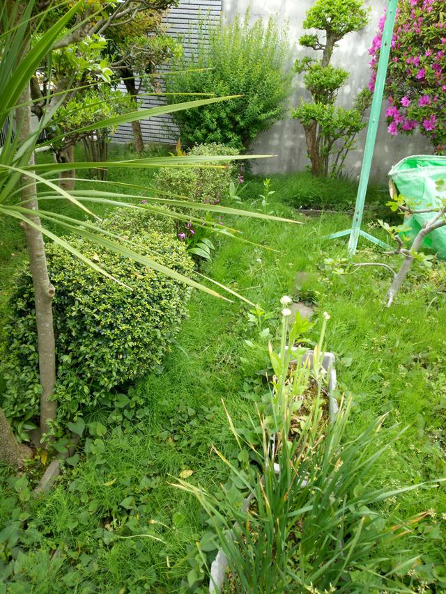 草引き作業前画像