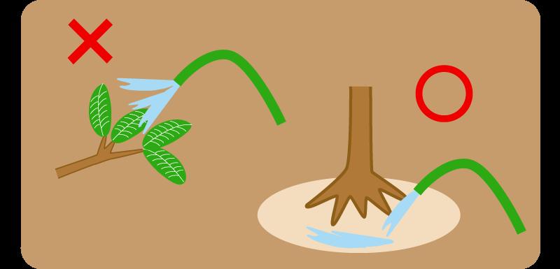 水やり方法